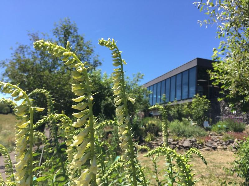 Floraisons au Jardin botanique de l'Aubrac